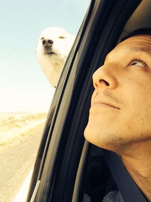 theo rossi road tripping w his dog