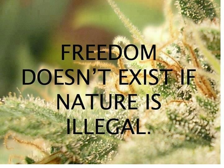 marijuan essay Marijuana essays (examples) filter results by:  this essay argues why marijuana should be decriminalized without further delay opponents of legalizing marijuana contend that it is a dangerous drug this is far from the truth for example, there has not been a single recorded case of death due to marijuana overdose.