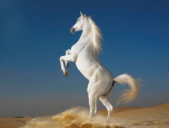 馬 horse