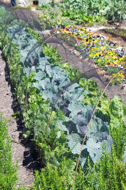 Neighbourhood garden project A morning at Oranjezicht City Farm market, Cape Town South Africa    Bthings.me