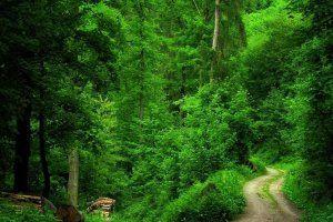 Forest, wallpapers, hD, Desktop Backgrounds