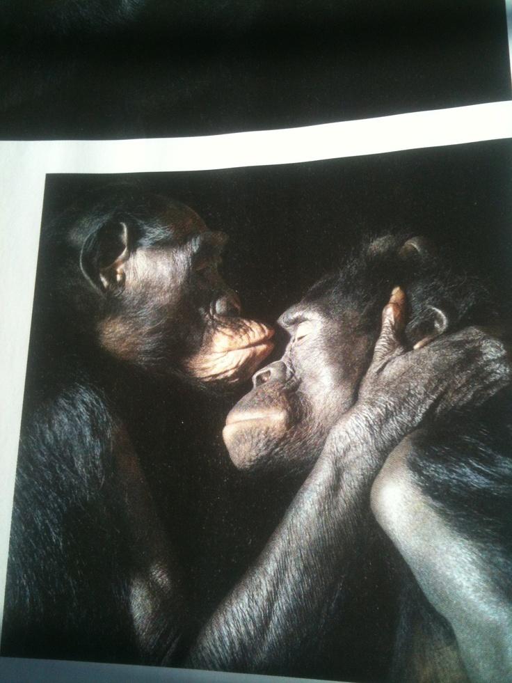 Bonobos (Intelligent Life)