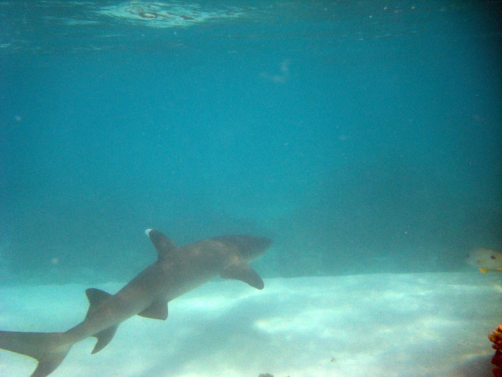 Encounters while swimming in the barrier Reef, Exmouth Western Australia