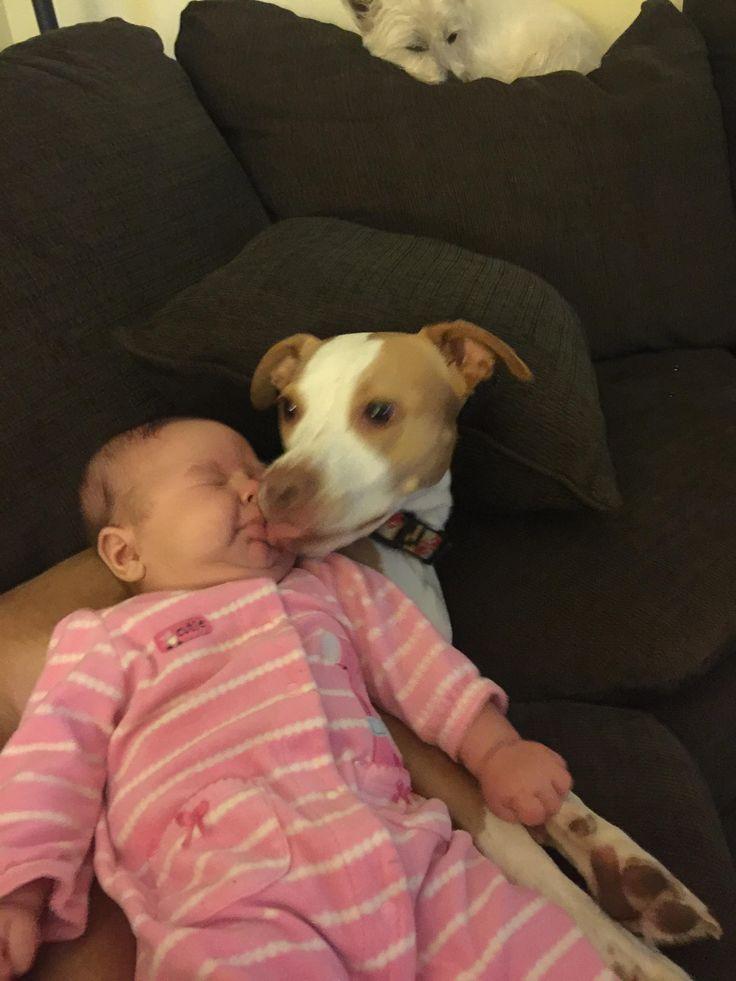 Vicious pitbull attack http://ift.tt/2eYwmwM