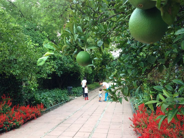 En el Jardín Botánico de Córdoba hemos hablado esta semana de agricultura. Podéis leerlo en www.criandonaranjos.com