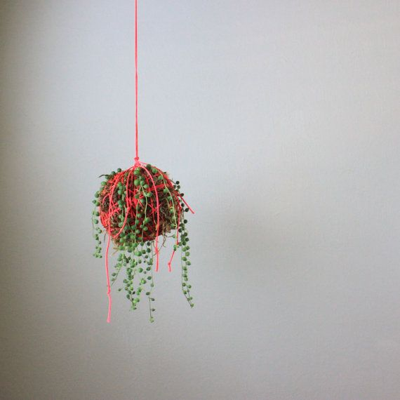 neon pink hanging moss ball string planter with string of pearls succulent vertical garden. Black Bedroom Furniture Sets. Home Design Ideas