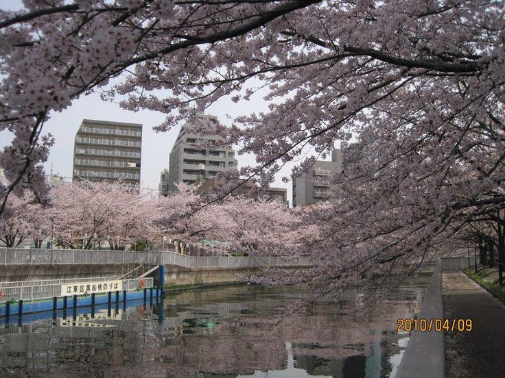 Monzennakacho : Sakura