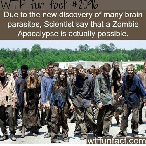 WTF Fun Fact #2096: Due to the discovery of many brain parasites, scientists say that a zombie apocalypse is actually possible.