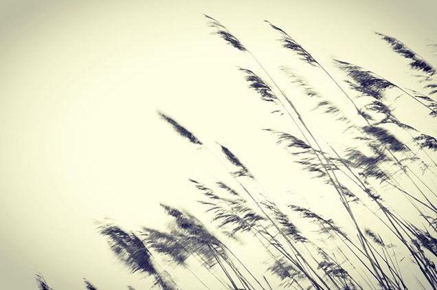 Por muy fuerte que sea el temporal siempre hay que volver a levantarse y seguir caminando!! #ganasdeluchar #sobreponerse #yosoyelmejor #nadapodraconmigo #photgrapher #photograph #me #blancoynegro #blackandwhite #barcelona #madrid