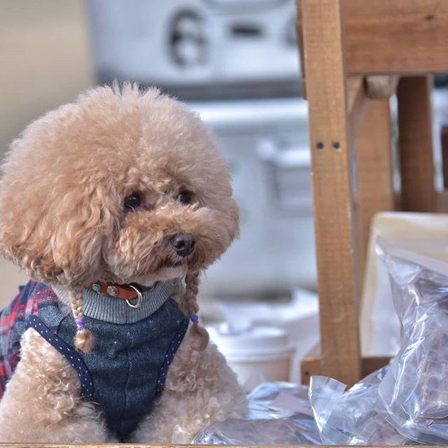 先週末開催された  アシガラマルシェに 来店頂きましま  #lunkoloveママが撮影して 頂いた写真📸✨ 半端ない長~いレンズで 憧れの後ろがぼやけた感じ😌  昨日は地元の月例イベント 出店致しましたが 途中天気が荒れて 訳有り品が余っちゃいました❗  欲しい方は 直接か、ネットから お買い求め下さいませ  #しっぽはともだち #犬の手作りおやつ #犬ジャーキー #無添加 #クラフトフェア #まんまのおやつ #愛犬 #愛猫 #仙台無添加ジャーキー #手作り #ドッグフード #国産手作りジャーキー