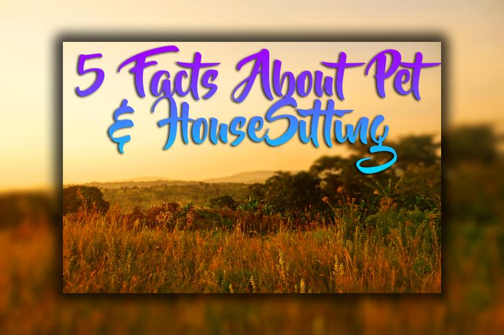 5 Important Facts About House And Pet Sitting - http://exploramum.com/2017/09/5-important-facts-house-pet-sitting.html