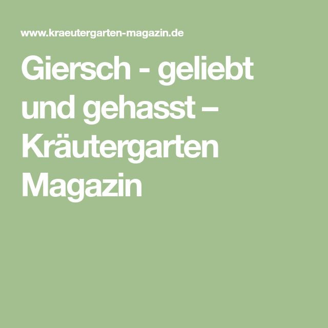 Giersch - geliebt und gehasst – Kräutergarten Magazin