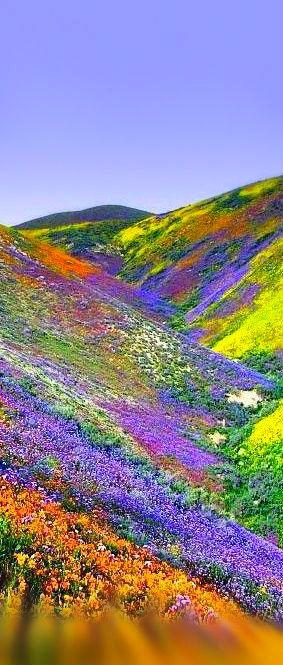 Spring in Tibet