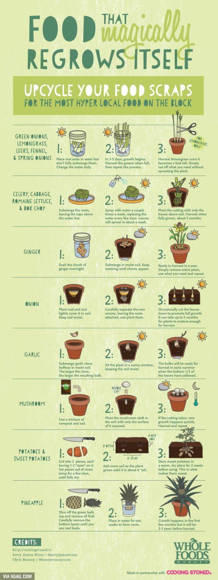 So viele Möglichkeiten Pflanzen aus seinen Resten anzubauen, wundervoll!