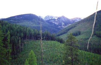 Hunting Trips - Cabinet Mountains Between Libby & Kalispell MT | Silver Bow Outfitters & Guides