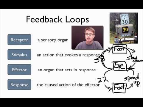 A great explanation of the Elements of a Feedback Loop (negative feedback and positive feedback). Great for endocrine system understanding!