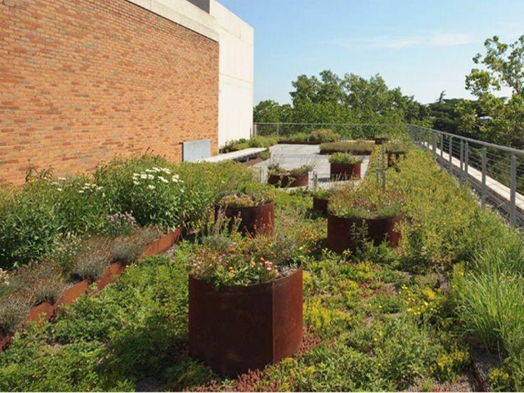 The Virginia Commonwealth University (VCU), Pollak Building greenroof; Photo Courtesy VMDO Architects