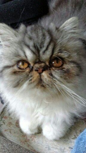 Miss Molly - beautiful eyes