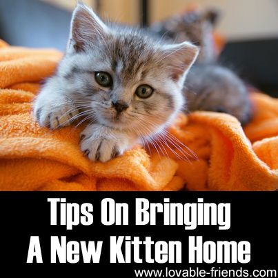 Tips On Bringing A New Kitten Home ►► http://www.lovable-friends.com/tips-on-bringing-a-new-kitten-home/?i=p
