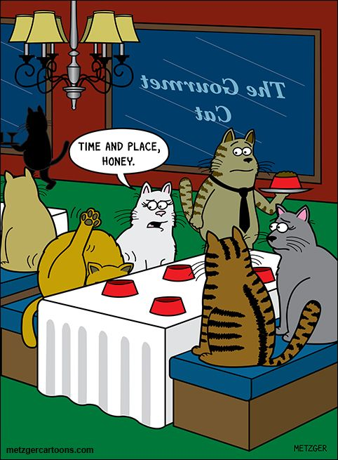 706 best Cat and Dog Humor and Cartoons images on Pinterest