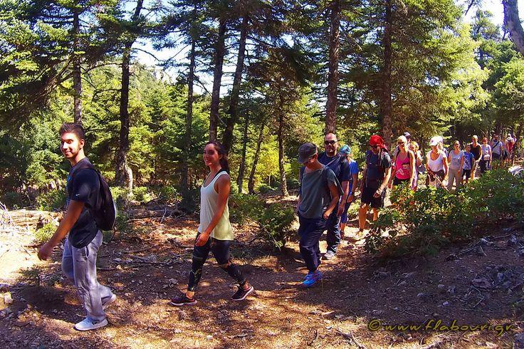 Θα περάσουμε από πυκνά δάση, θα φτάσουμε σε κορυφές για να απολαύσουμε τη μοναδική θέα από ψηλά και βέβαια θα ξεδιψάσουμε στα κρυστάλλινα νερά των πηγών. Η πεζοπορική βόλτα είναι προσφορά από το καταφύγιο Φλαμπούρι! Ξεκινώντας από .....