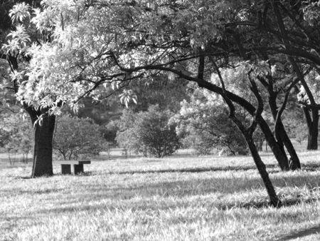 La photographie infrarouge sur photoshop | Blog Elephorm