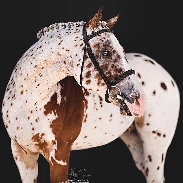 Speckled, splashed, marbled and spotted horse, oh my! Beautiful markings!