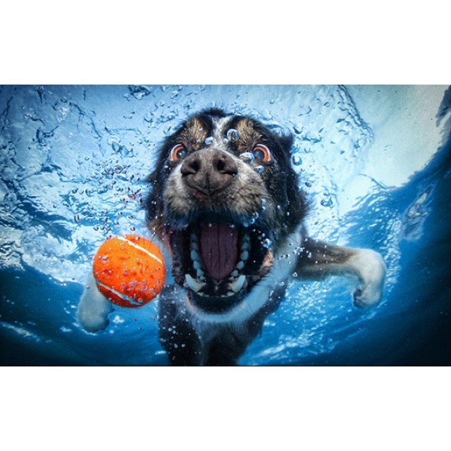 Best Underwater Dogs Images On Pinterest - The best underwater photographs of 2016 are amazing