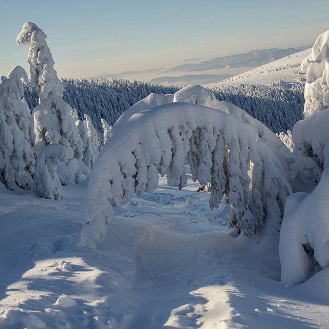 Вот в такой красоте катаются отважные лыжники на Австрийских курортах. А фотографу в таких условиях очень трудно выжить)) #фотоизабеллазубкова #лес #австрия #зиммеринг #зима #гора #природа #пейзаж #путешествия #landscape #nature #travel #scenery #beautiful #view #scenic #tourism #natural #trees #environment #land #forest #mountain #winter #izabellazip #фотограф