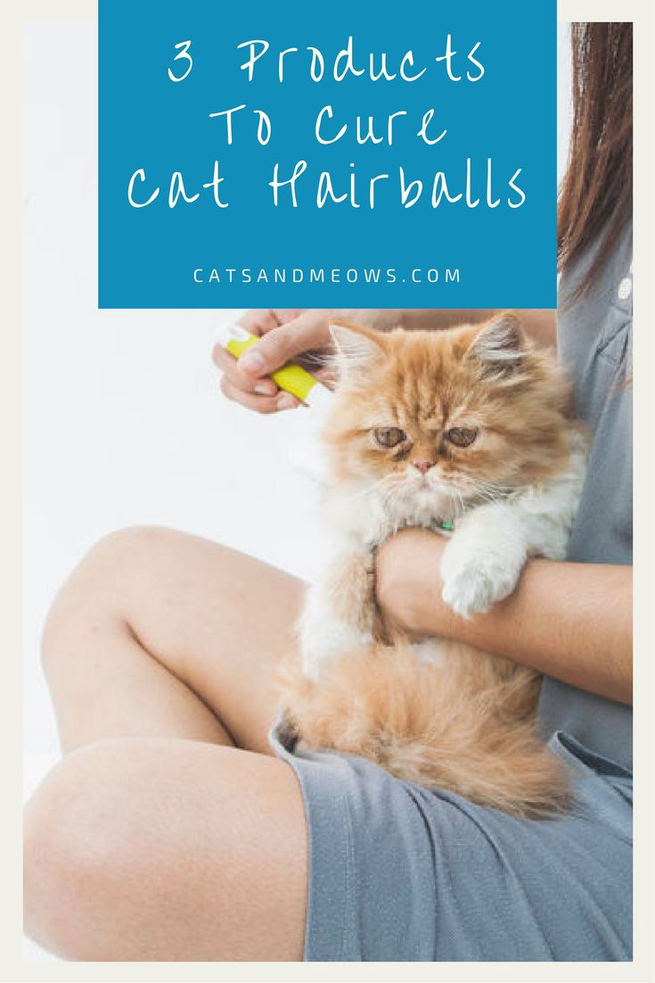 The 3 best products for curing cat hairballs cats and