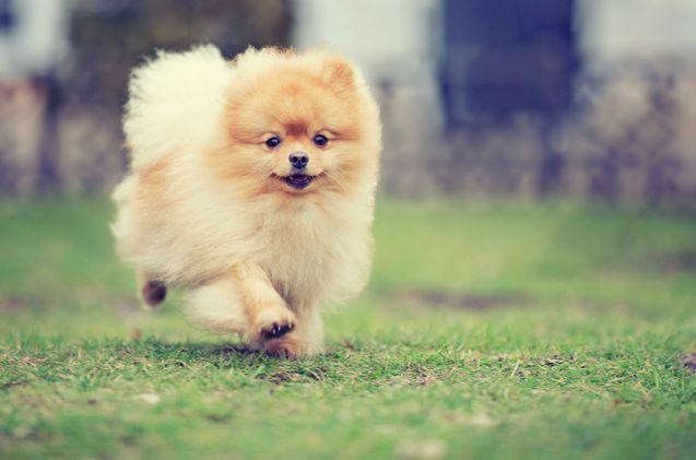 cute-dog-names-12.jpg
