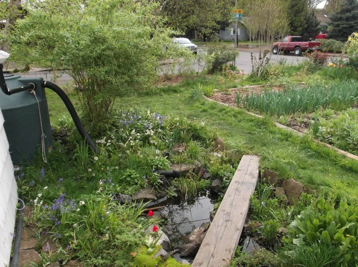 44 best images about rain barrels on pinterest water for Design of water harvesting pond
