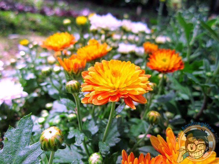 Taman pustaka bunga kandaga puspa