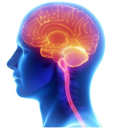 The RIGHT brain is creative, instinctive and learns through sponging up information through a type of intuitive absorption. The LEFT brain is logical, language and everything that we see in society, methodical, disciplined and learns through repetition, reason and organization of data.  #DMIT_Software #Midbrain_Activation #Midbrain_Activation_for_Adult