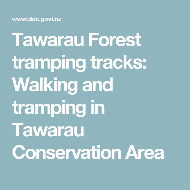 Tawarau Forest tramping tracks: Walking and tramping in Tawarau Conservation Area