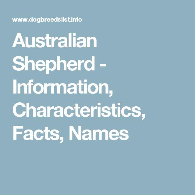 Australian Shepherd - Information, Characteristics, Facts, Names