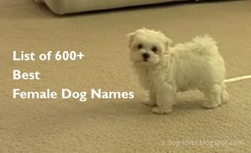 List of 600+ Best Female Dog Names