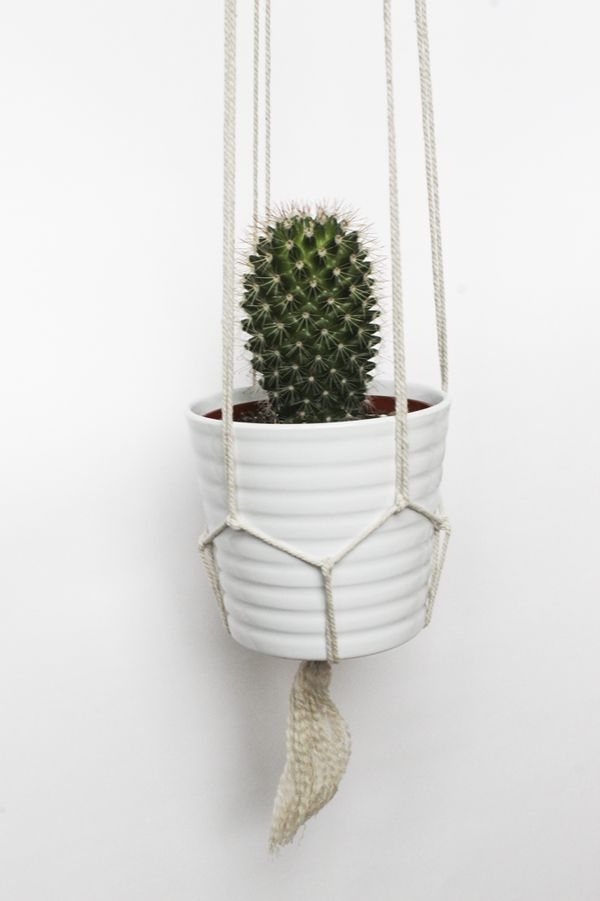 DIY Hanging Cactus Plant with Ropes
