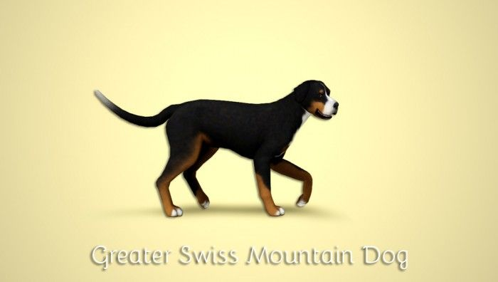 Sims  Cats And Dog Hair Without Ears