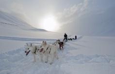 Sleehonden trektocht in Spitsbergen.