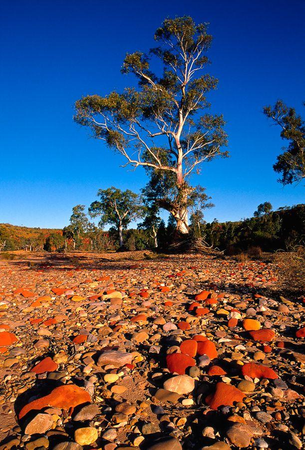 Colours of Australia - Finke Gorge, NT