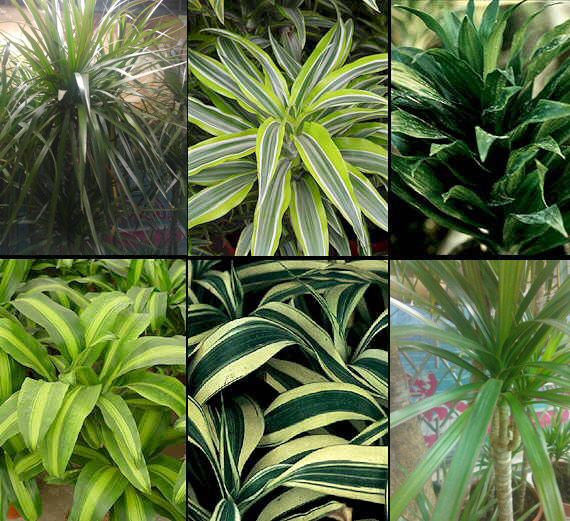 206 best images about house plants on pinterest - Indoor plant types ...