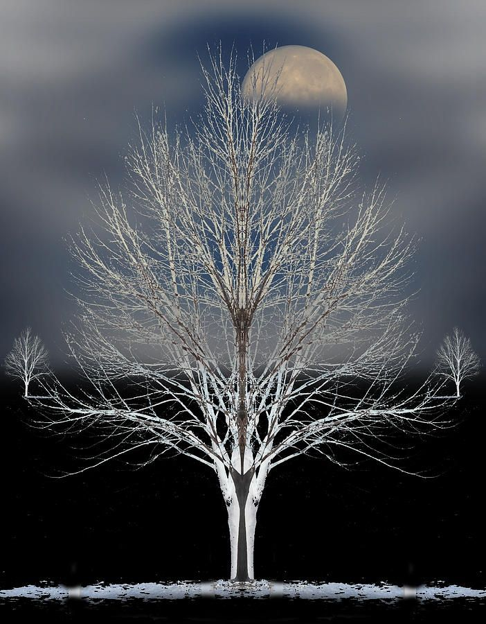 Moon over Tree – Amazing Pictures - Amazing Travel Pictures with Maps for All Around the World