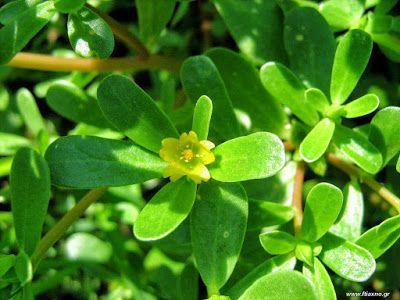 Τα καλοκαιρινά φαγώσιμα χόρτα: θεραπευτικές ιδιότητες http://ift.tt/2t4Y0wt