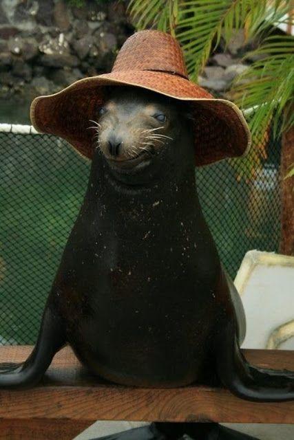animals wearing birthday hats - photo #12