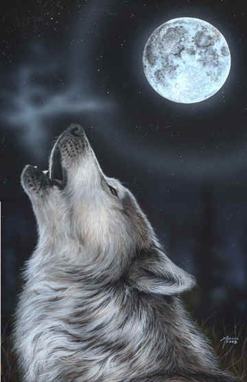 "Wolves:  #Wolf's ""Midnight Song,"" by Marilyn Barkhouse."