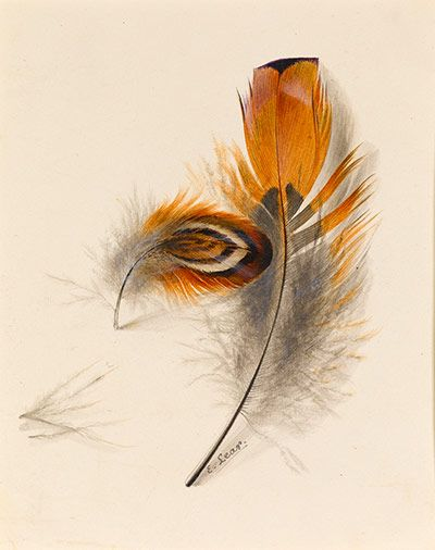 Edward Lear: Study of Two Feathers by Edward Lear