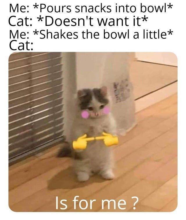 46 Dumb Cat Memes For The Feline Fiends In 2021 Cat Memes Cats Dumb Cats