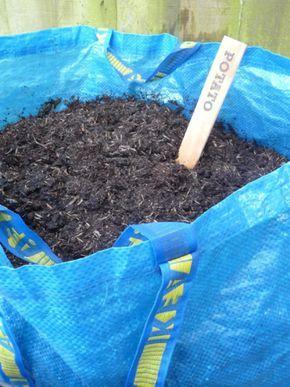 cultiver pommes de terre La méthode la plus simple utilise un sac cabas (Crédit : Charlotte Powell/Flickr CC)