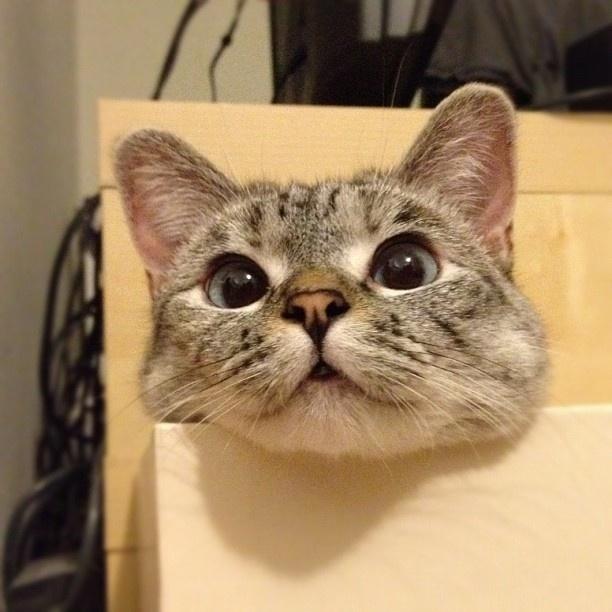 omg...the eyessss...too cute!